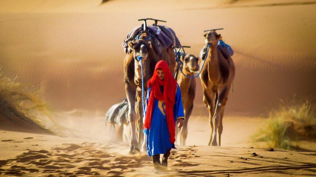 Dromedarios Marruecos Sahara